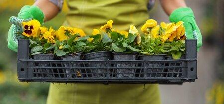 Onhandige oproep om geen 'giftige planten' meer te kopen bij tuincentra